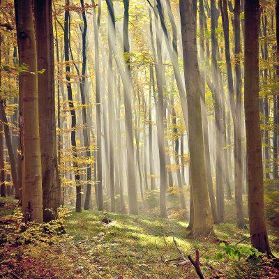 Jeseň v Malých Karpatoch